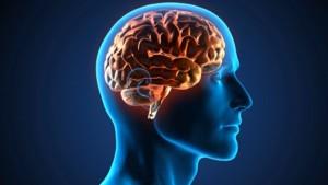 El cerebro procesa estímulos durante el sueño profundo