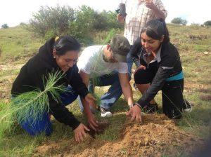 Realiza PVEM reforestación en San Pablo Huixtepec