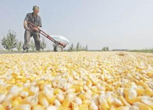México, cuarto productor de alimentos balanceados