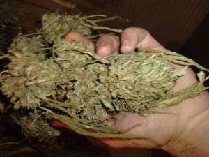 Asegura base de operaciones mixtas nueve kilos de  marihuana en la Sierra Sur