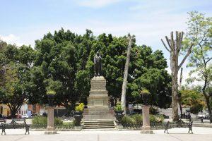 Atiende Gobierno Municipal 911 árboles de la ciudad