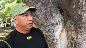 Ambientalistas piden  acciones para el cuidado del arbolado en el zócalo