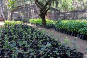 Cuenta Bosque El Tequio con vivero forestal